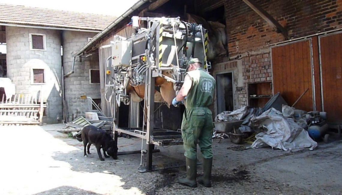 vaca-1-recorte-con-ANKA-4-1024x576